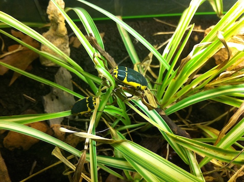 05_insectarium_montreal